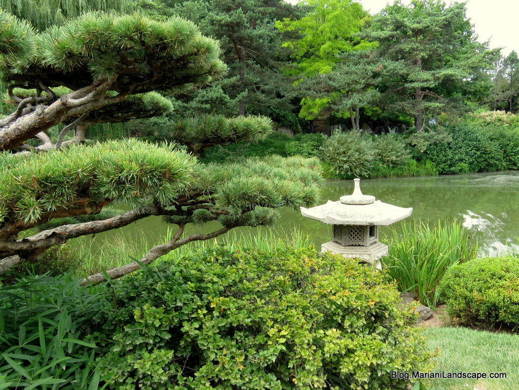 elements and plants for a japanese garden in the garden