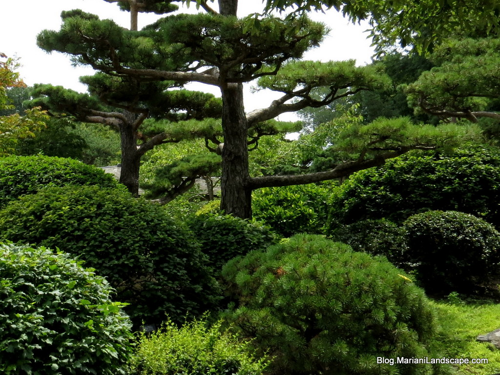 Elements and plants for a japanese garden in the garden for Best plants for japanese garden