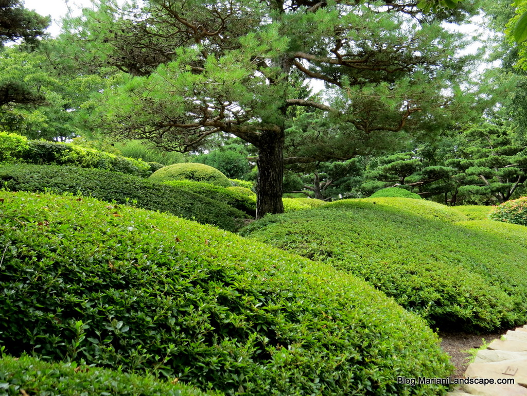 The japanese garden in the garden with mariani landscape for Garden shrubs