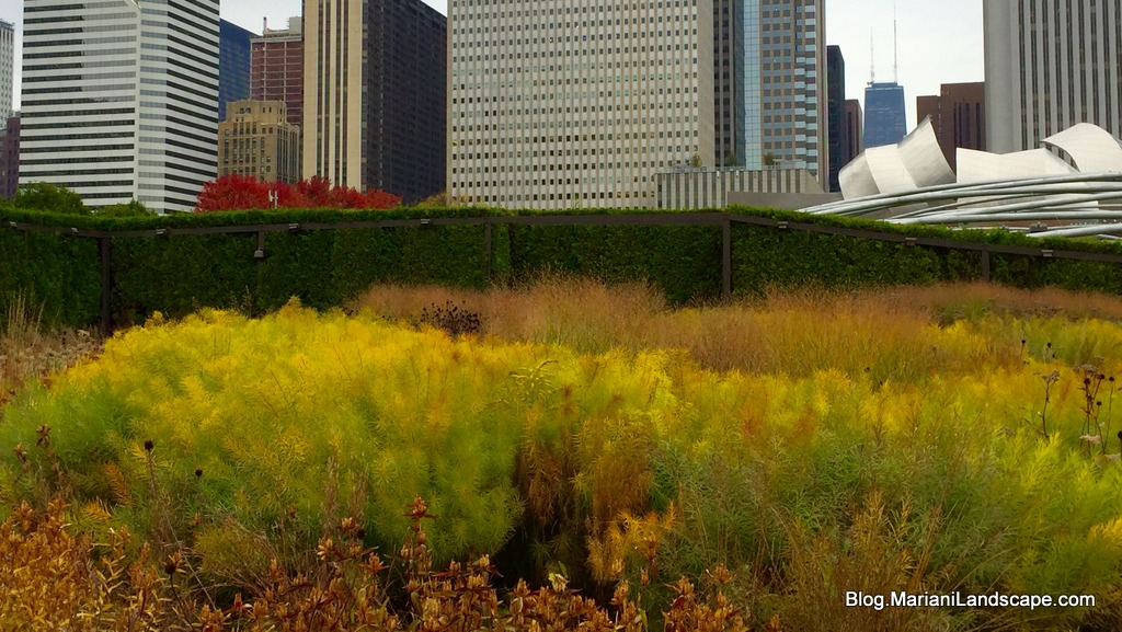 The ecology of the lurie garden seattle landscaping blog for Lurie garden planting plan